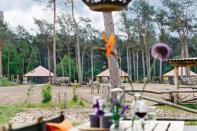Safaripark Resort Beekse Bergen